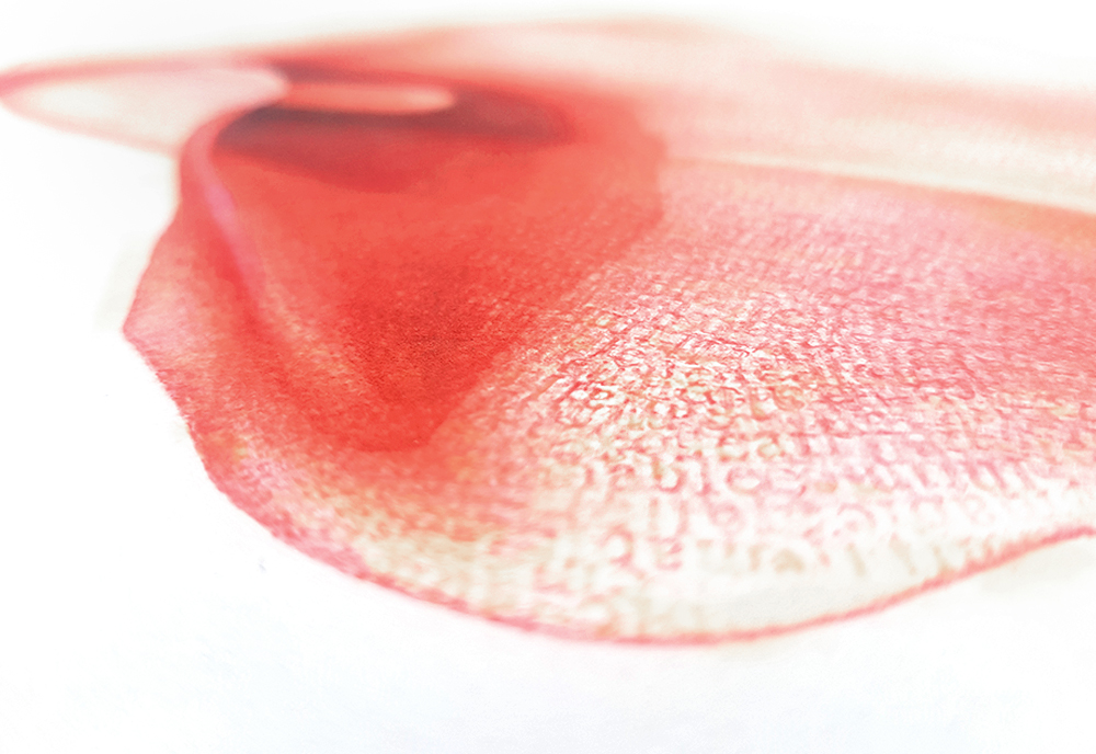 Calla Lily 01 Red drawing detail